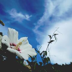 花/青空 暑いですね~。もう夏??