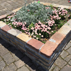 花/花壇/グリーン 好きな人の好きな花。同じ花を見て綺麗って…