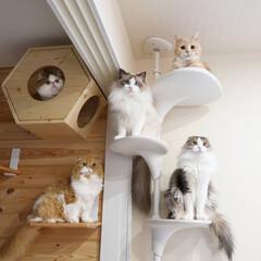 LIMIAペット同好会/フォロー大歓迎/ペット/ペット仲間募集/猫/にゃんこ同好会/... キャットウォークの一部です。 まだ5兄弟…