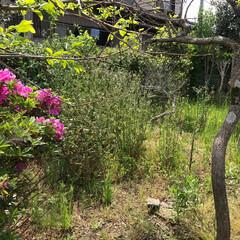 草刈り/草取り/暮らし/住まい/リフォーム 庭の草刈り作業終了! 香取市と近隣なら草…