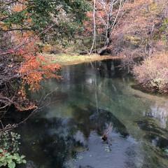 日本の四季/紅葉/秋/おでかけ/旅 秋の日光、立山。