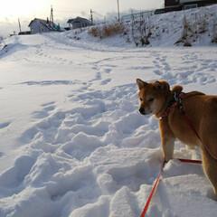 雪あそび/あさ/散歩/氷点下/北海道/雪国/... 寒いからもう帰りたいワン🐶💦