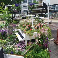 彩り/夏祭り/大通公園/札幌/アート/フラワー/... ピアノからあふれでる色とりどりフラワー🎵…