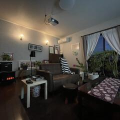 シアタールーム/観葉植物 またまたコロナ🦠の流行で外に出るより家で…(2枚目)