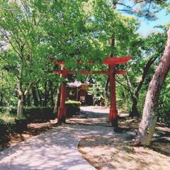 恋愛の神様/自然/みどり/神社 鹿児島県大口にある、清水神社…⛩ 木の緑…