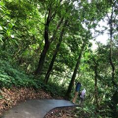 鹿児島/雄川の滝/滝/マイナスイオン/癒し 西郷どんのオープニングで流れている…鹿児…(4枚目)