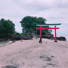 鹿児島/荒川天神/学問の神様/神社/海 海の中にある神社🌴急な階段をロープを使っ…