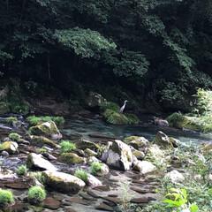 鹿児島/雄川の滝/滝/マイナスイオン/癒し 西郷どんのオープニングで流れている…鹿児…(3枚目)