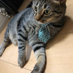 猫/愛猫家/ネコ/きじとら/愛猫/ねこ/... 今日は軍曹さん🐈の誕生日🎂 と言っても保…