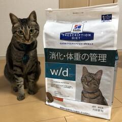 ネコ/きじとら/ねこ/ダイエット/癒し/保護猫/... 夏の思い出❗️  この夏から、 軍曹さん…