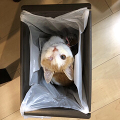 キジトラ/きじとら/ネコ/猫/ねこ/多頭飼い/... ゴミ箱のぉー ゴミ袋の中から。。。 こん…