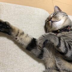 愛猫家/キジトラ/愛猫/ねこ/癒し/保護猫/... た、助けてぇー!!!! みたいに見える😂…