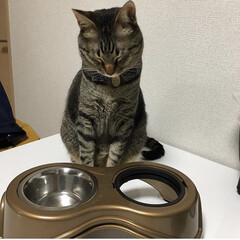 ネコ/ねこ/保護猫/キジトラ/猫/ペット おはようございます☔  軍曹さん🐈の特技…