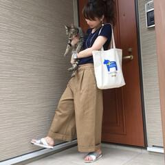 散歩/ネコ/きじとら/愛猫/ねこ/保護猫/... 軍曹さん🐈とお出かけ前に パシャリ📸