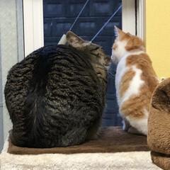 保護猫/茶白猫/茶白/ネコ/ねこ/保護ねこ/... 外を見てるのかと思ったら。。。 チュー❤️
