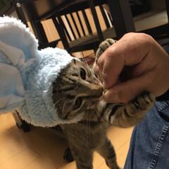 愛猫家/猫/キジトラ/愛猫/ねこ/癒し/... 軍曹さんの小さい頃の写真❤️ 写真整理し…