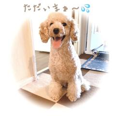 暑さ対策 愛犬のお散歩/おうち時間/からだメンテナンス/教えて!みんなのケアグッズ/メンテナンスグッズ/ケアグッズ Amazon〜チャム夏用服 とてもリーズ…(3枚目)