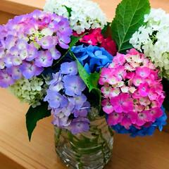 紫陽花/アジサイ/梅雨/住まい/玄関 ご近所さんから、 お庭で咲いたお花を頂き…