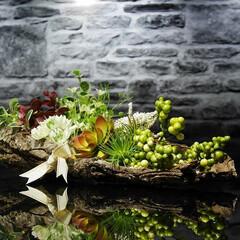 流木/インテリア/おしゃれインテリア 天然の流木の皮を使い庭園をイメージして作…