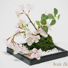 アートフラワー/苔玉/桜 「苔玉と桜」アートフラワーで和モダンなイ…