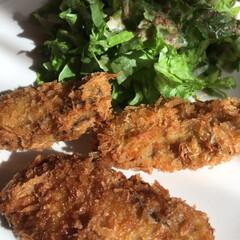 牡蠣フライ/おうちごはん 牡蠣フライが無性に食べたくてottoが牡…