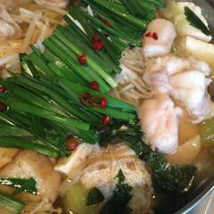 もつ鍋/秋/おうちごはん もつ鍋  昆布鰹出汁、酒、塩、薄口、醤油…