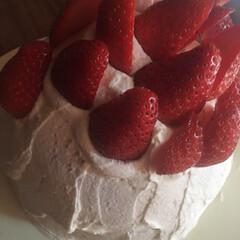 ドーム型/ショートケーキ/スイーツ/冬 大きな苺をもらい、スポンジ焼くの苦手だか…