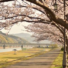 ニコン/Nikon/一眼レフ好きな人と繋がりたい/一眼レフ初心者/一眼レフのある生活/一眼レフのある暮らし/... 今年も桜を撮りに行ってきたよぉ(///ω…(10枚目)