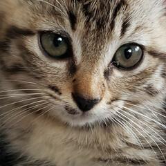 しずく/雫/保護ネコ/保護ねこ/保護猫/子猫を保護しました/... 家族が増えました(///ω///)♪  …(5枚目)