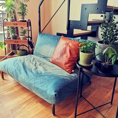 ソファー/サイドテーブル/グリーン/観葉植物のある暮らし/ジャーナルスタンダードファニチャー/インテリア/... ちょっと模様替え(1枚目)