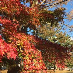 高台寺より/御所/京都御苑/京都/風景/旅行/... 50年以上京都府民をしているのに、京都の…