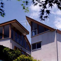 木質/二世帯/中庭/シンプル/ナチョラル M House