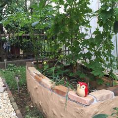 花壇/エクステリア/ガーデン/DIY/ハンドメイド ジョリパッド 、コンクリートブロック、モ…