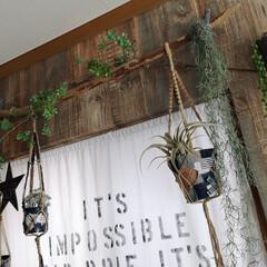 壁紙屋本舗/グリーンのある暮らし/流木ディスプレイ/流木インテリア/ステンシル/カーテン/... 暗かったカーテン。 そして開けることのな…