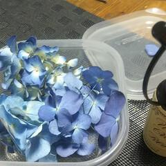 米粉のパン/紫陽花ドライ/お花/私のお気に入り/わたしのお気に入り こんばんは❤️ またお花を買いに焦りなが…(4枚目)