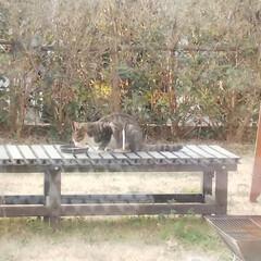 春のお花/猫 最近、猫がお庭へ‼️ しかもそのパンくず…(1枚目)