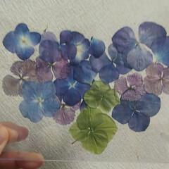 お花/至福のひととき/令和の一枚 おはようございます🍀 また雨ですね…元気…(3枚目)