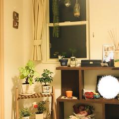 Salyu/みどりのある暮らし/夏インテリア/100均/セリア/ダイソー 観葉植物たちが増えていっております🌴(1枚目)