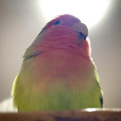 「私は鳥の神であ〜る-_-b」(1枚目)