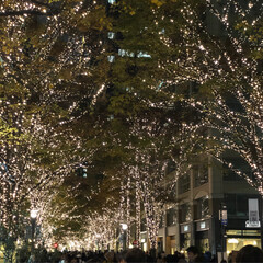 ライトアップ/フォロー大歓迎/クリスマス/クリスマスツリー/風景 先週末に大手町の丸の内仲通りに行ってきま…