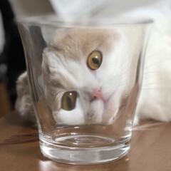無印/フォロー大歓迎/ペット/ペット仲間募集/猫/にゃんこ同好会 変顔🤪シリーズ! まるでアートみたい?!…