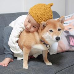 犬と子供/兄弟/柴犬/犬/わんこ同好会/ペット 🐕僕の弟👦