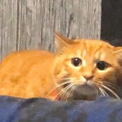 いか耳/最近/ゆきちさんのお尻に/猫パンチ/猫ちゃんVSゆきちさん/プルプル震えて/... ゆきちさんの後ろ姿を見つめる 兄宅の猫ち…