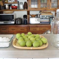 記念樹/梅シロップ/梅仕事/住まい/キッチン おはようございます(♡ˊ艸ˋ♡) 我が家…