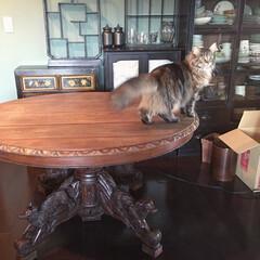 ダイニングテーブル/アンティーク家具 天板のガタつき修理と、もう少し濃くする塗…