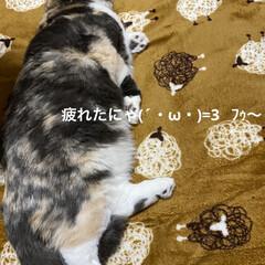 雑貨屋さんのお花/動物大好き/ニャンズの寝顔/こむぎ/せんぶちょ/お花/... おはようございます♡  すっかりお店のお…(3枚目)