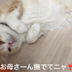 マッタリ/撫でてポーズ/猫/フォロー大歓迎 おはようございます☁️ 今日も2ニャンに…(2枚目)