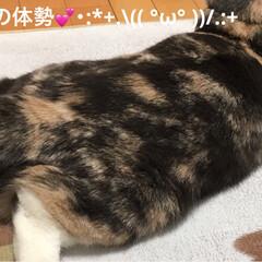 マッタリ/撫でてポーズ/猫/フォロー大歓迎 おはようございます☁️ 今日も2ニャンに…(3枚目)