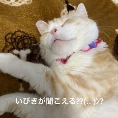 雑貨屋さんのお花/動物大好き/ニャンズの寝顔/こむぎ/せんぶちょ/お花/... おはようございます♡  すっかりお店のお…(7枚目)