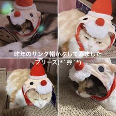 ヘソ天/フリーズ/サンタ帽/こむぎ/セントポーリア/クリスマス/... おはようございます( ´ ▽ ` ) し…(4枚目)